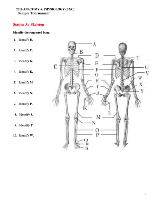 Anatomy & Physiology Worksheet With Answers printable pdf