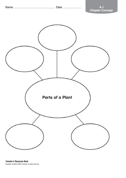 Parts Of A Plant Biology Worksheet printable pdf download
