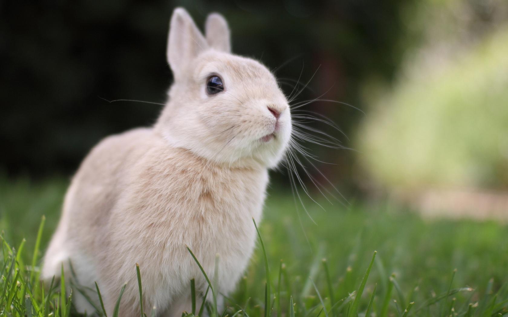 Cute White Baby Rabbits Wallpapers Hd Bunny Rabbit Cute Free Desktop Wallpaper Download