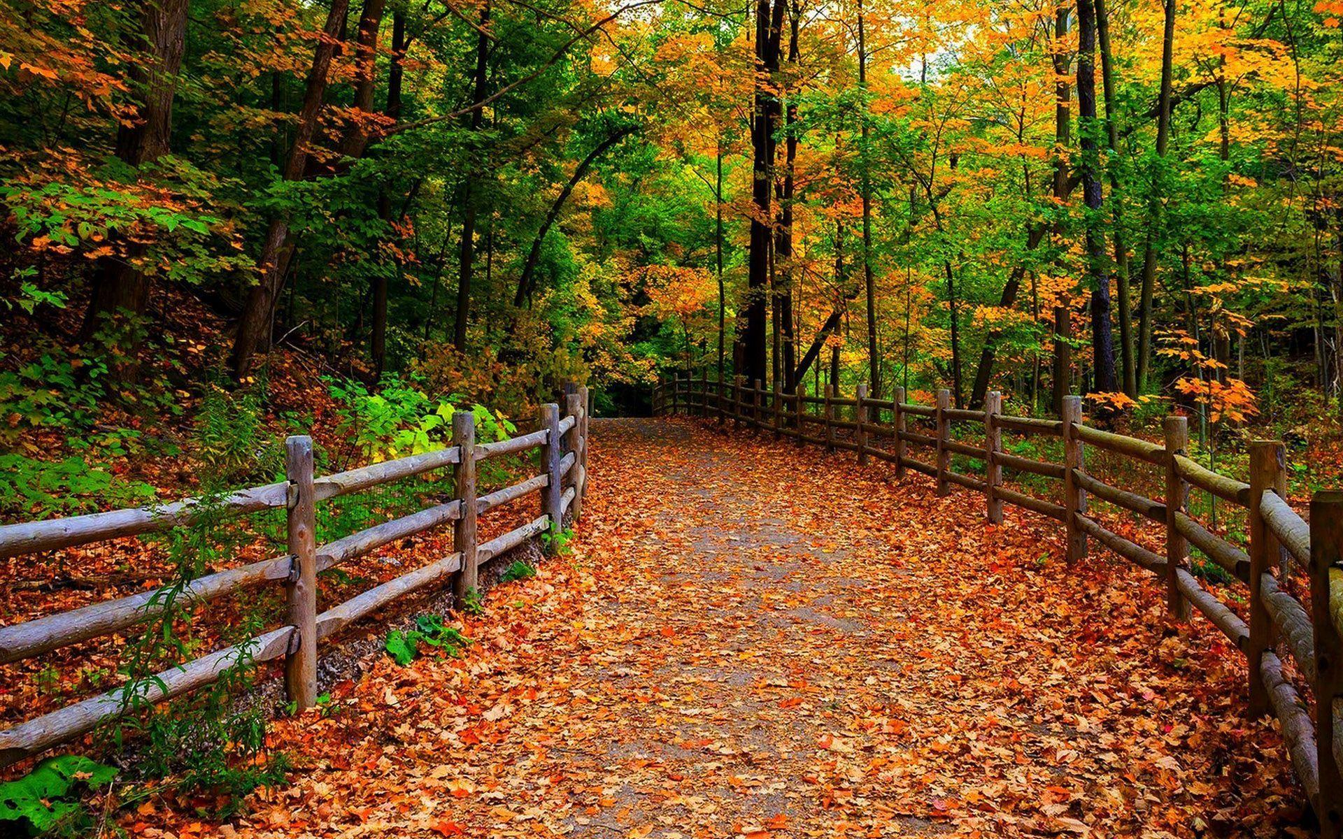 Fall Tree And Black Fence Wallpaper Hd Fence Along The Path To The Forest Wallpaper Download