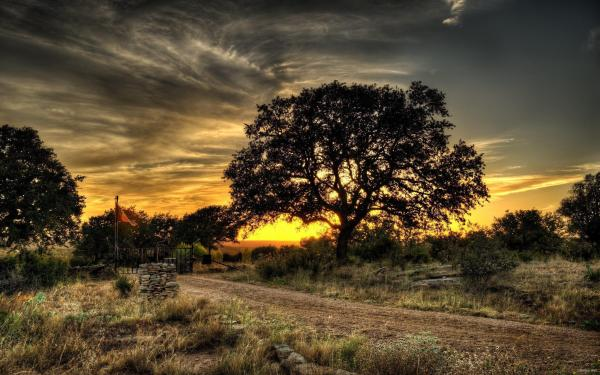 HD Landscapes Nature Trees Hdr Photography Best Wallpaper