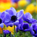 Hd Pretty Flowers Fullscreen Wallpaper Download Free 140707