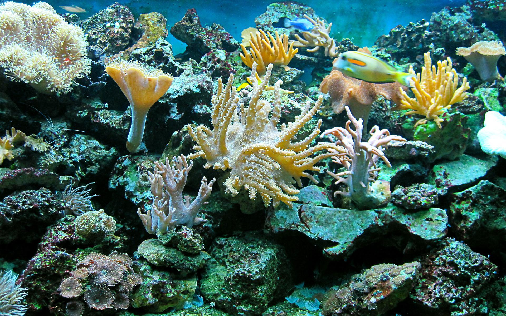 3d Live Wallpaper Acuarium Free Hd Sea Underwater Ocean Reef Fish Widescreen Wallpaper