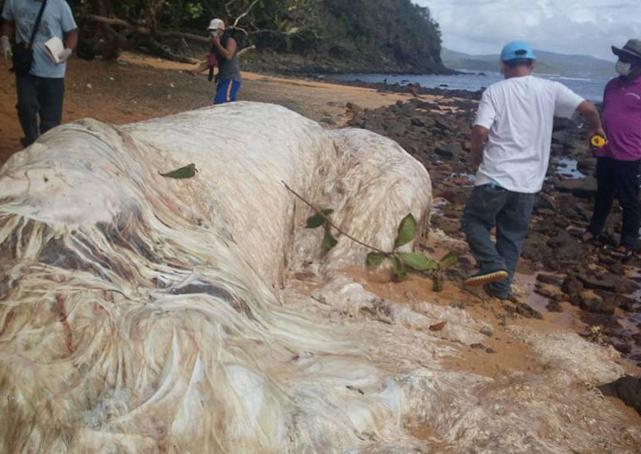 Island Monster Mystery