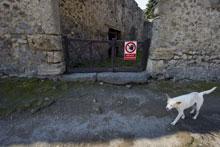 Un cane randagio tra gli scavi