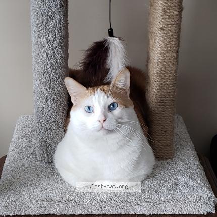 #591639 Aries lost cat in EDMONTON - Lost Cat Canada