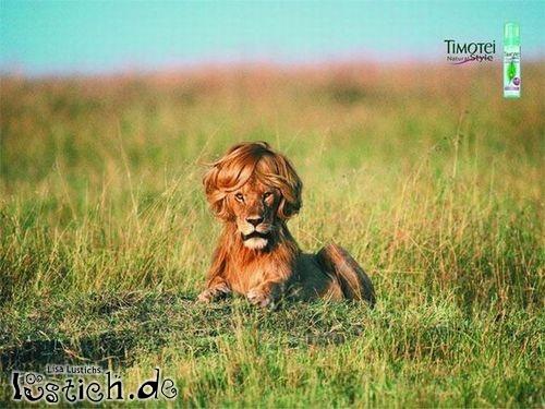 Schwuler Löwe Bild Lustich De