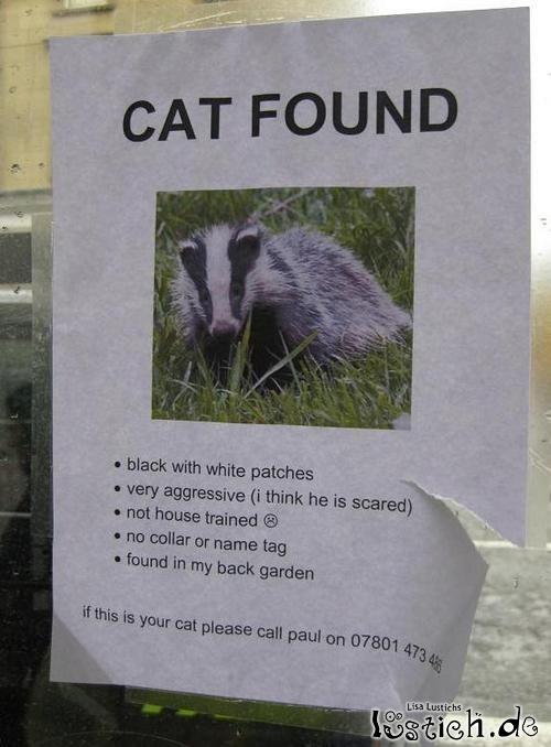 Katze gefunden Bild  lustichde