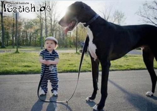 Groer Hund Bild  lustichde