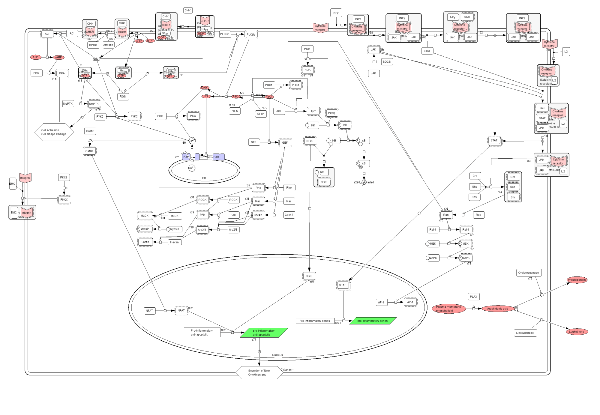 hight resolution of inflammation pathway diagram