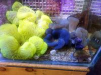 are carpet anemones reef safe - Home The Honoroak