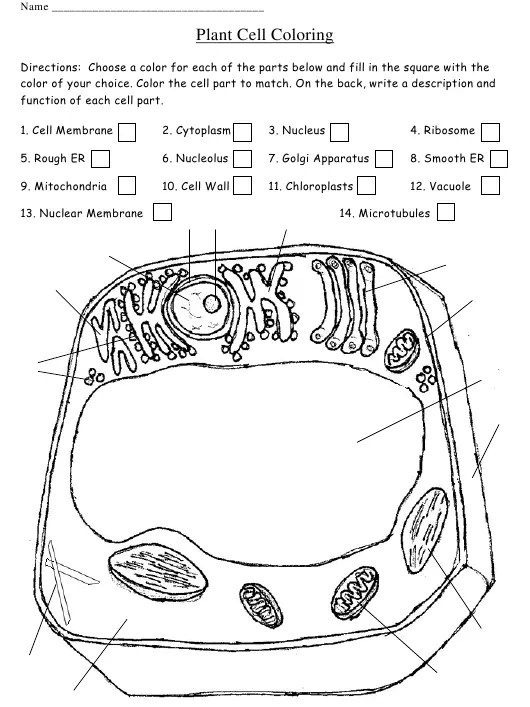 Plant Cell Coloring Worksheet Download Printable PDF