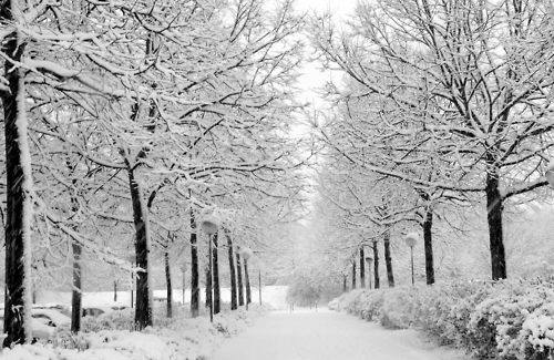 Outdoor-pretty-snow-winter-woodland-woods-favim.com-91609_large