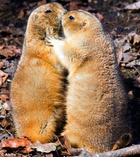 no public display of affection - Google Images