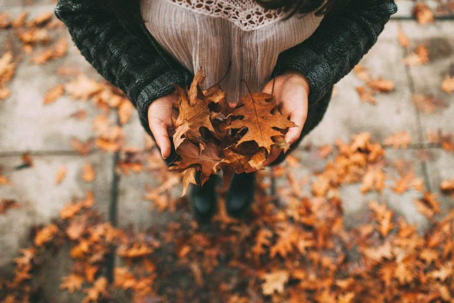 Bilderesultat for fall weheartit