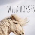 Wild Horses Birdy Uploaded By Cila On We Heart It