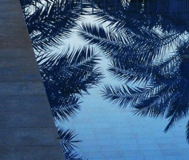 Blue Water And Palms Image