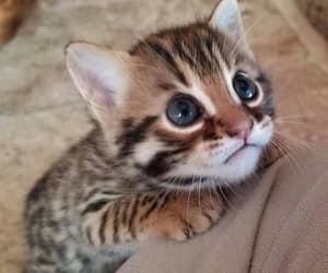تفسير القط في الحلم لابن سيرين رؤيا القطط في المنام