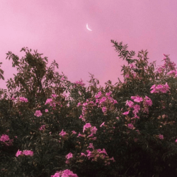 Image about pink in aesthetic book covers by ali