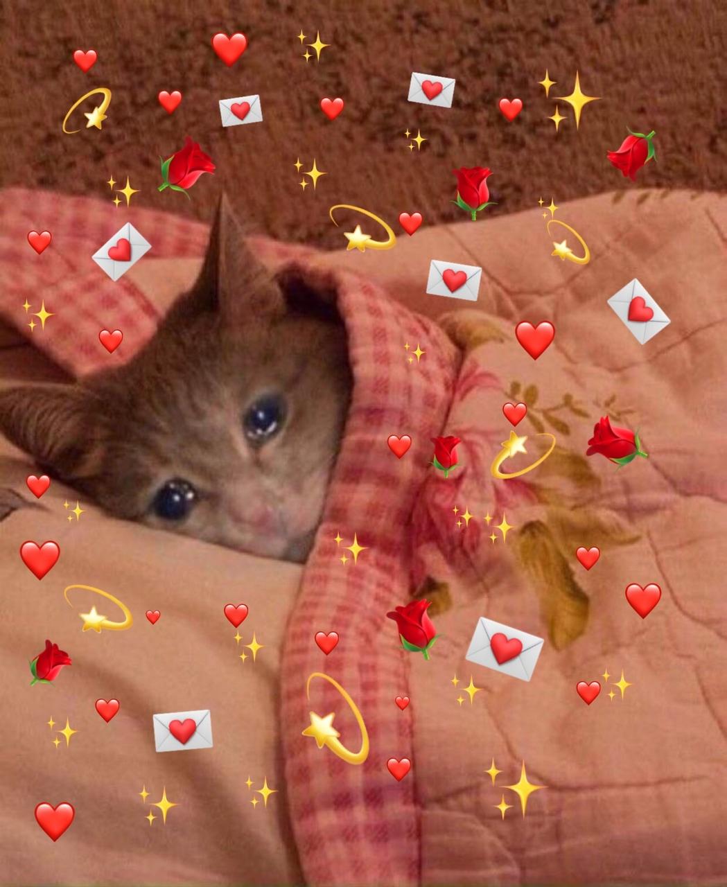 Cat Hearts Meme : hearts, Lover, Uploaded, Gallaghearts, Heart