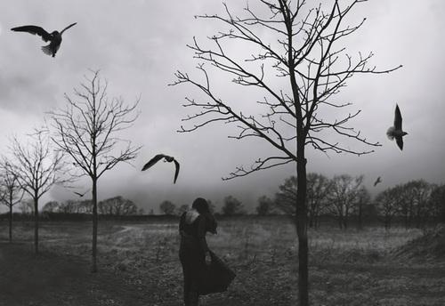 Img_9569eo3bwbirdss_large