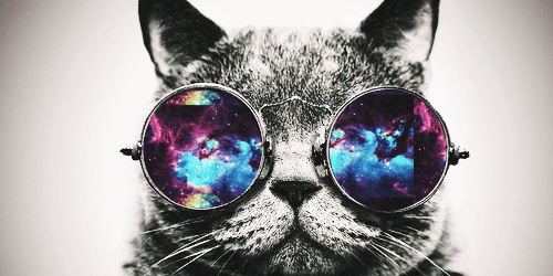Cute Llamacorn Wallpaper Cats Animals Leon The Professional Glasses Boss Sunglasses