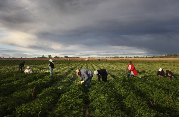 Colorado Farm Suffers As Immigrant Workforce