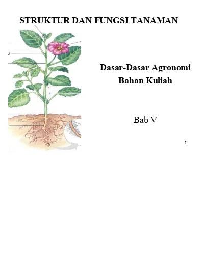Struktur Bagian Bunga : struktur, bagian, bunga, Struktur, Bunga,, Bagian-bagian, Modifikasinya, 123dok.com