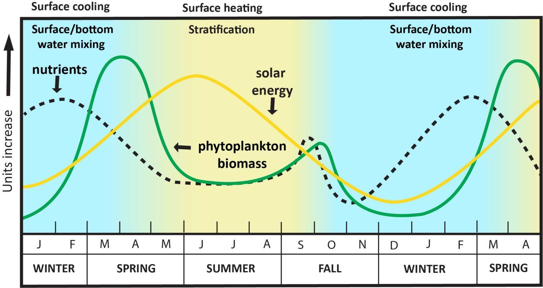 Graph of seasonal cycles
