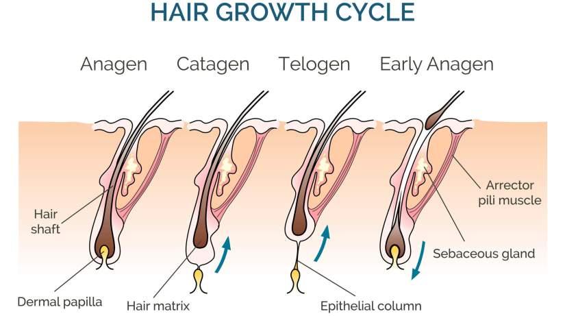 Benefits of HairFortin