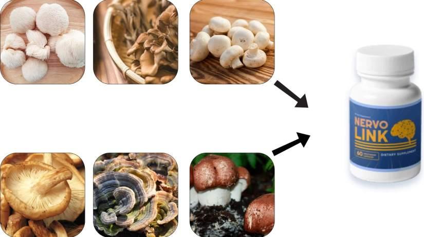 Ingredients Of Nervolink