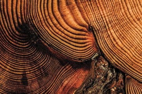 Tree rings https://mizzoumag.missouri.edu/2013/05/if-trees-could-talk/