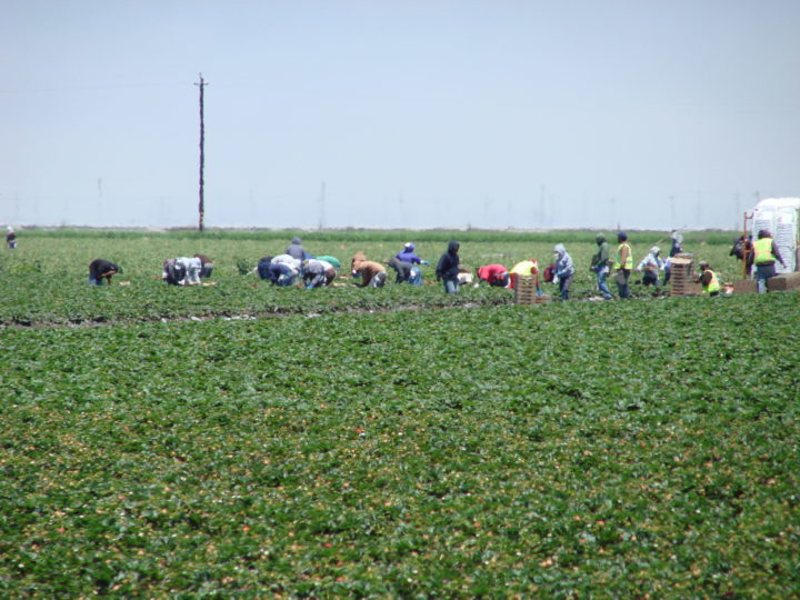 Summer heat poses farm labor dangers