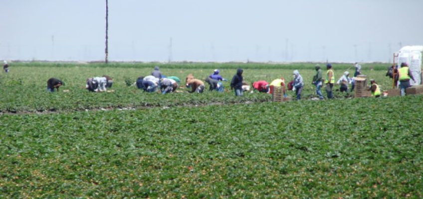 Legislative Action Day for farm labor contractors Wednesday