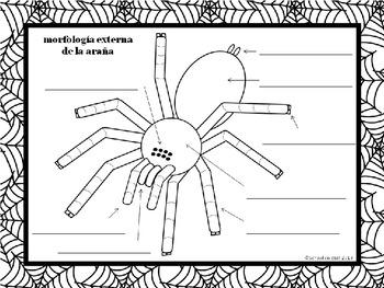 Labeled Diagram Of A Spider, Labeled, Free Engine Image