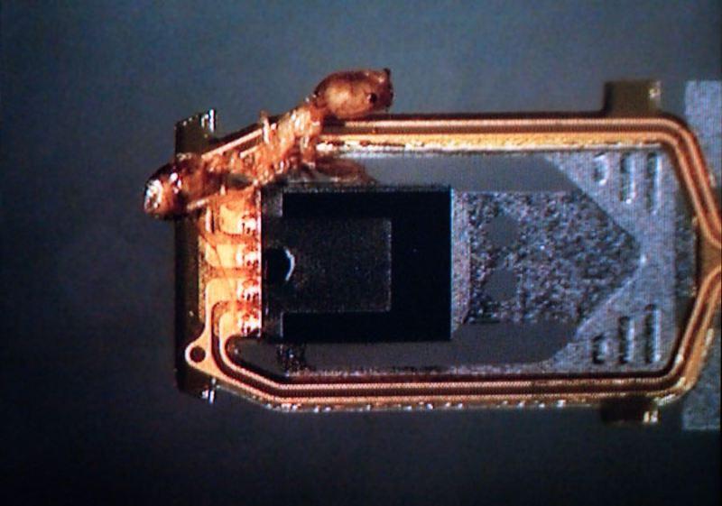 Ameise auf Lesekopf. Bild: Kroll Ontrack