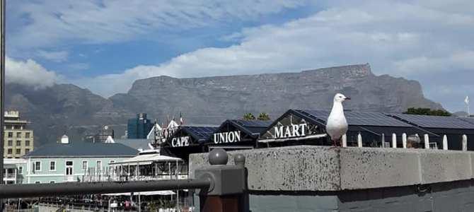 南アフリカ ケープタウン 410DAYS  (MAY/7/2019)
