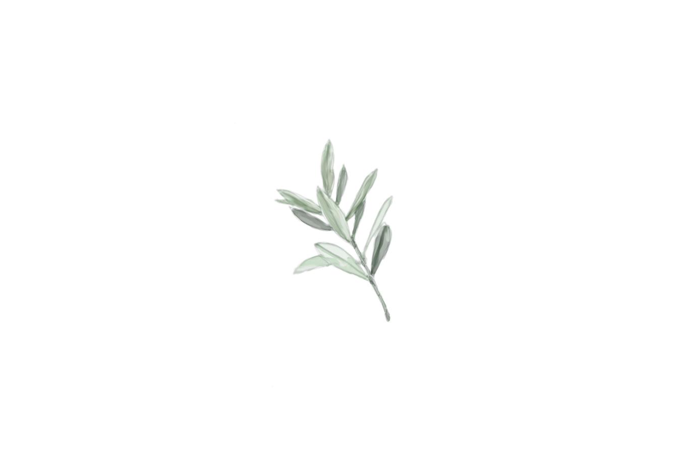 Ilustració branca olivera