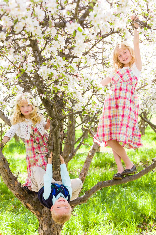 Kids climb an apple tree in Provo