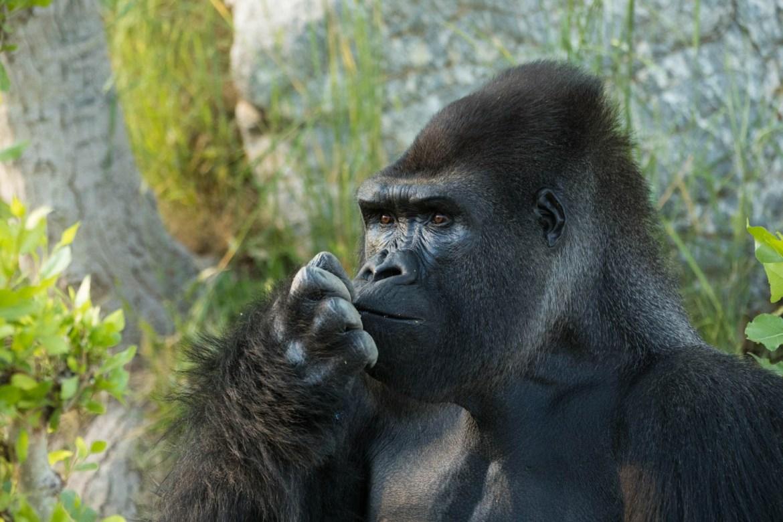 My finger smells like banana