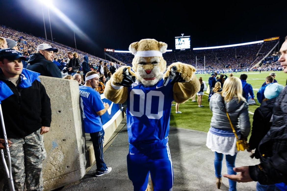 It's Cosmo the Cougar