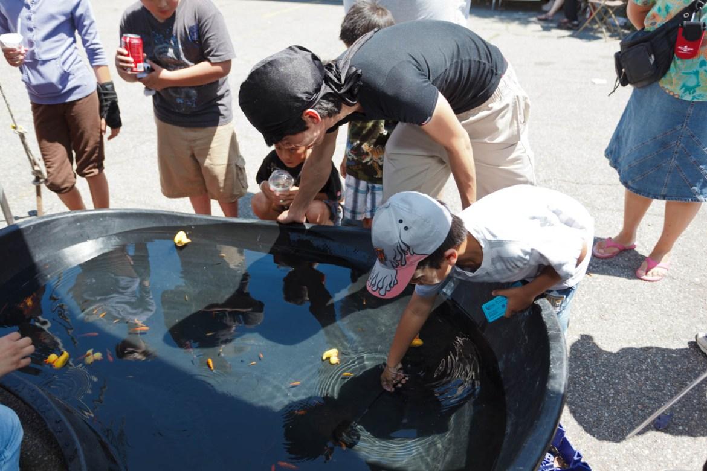 Fishing for goldfish