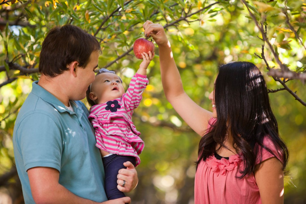 Baby reaches for an apple in an orchard