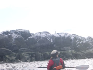 Tara, our other kayak guide, is giving information about the Chinstrap penguins that we are seeing on the rocks.