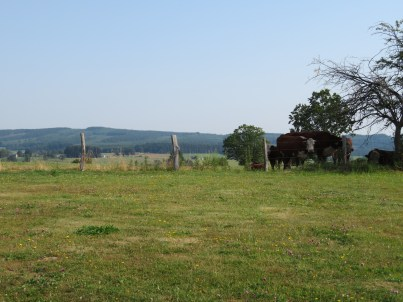 Cow pasture where part of the Battle took place.