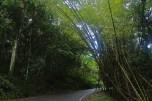 Yunque Rainforest Roads