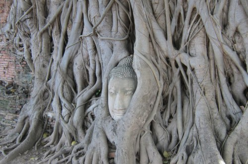 Buddha Head in Tree Roots, Wat Mahathat, Ayutthaya Historical Park