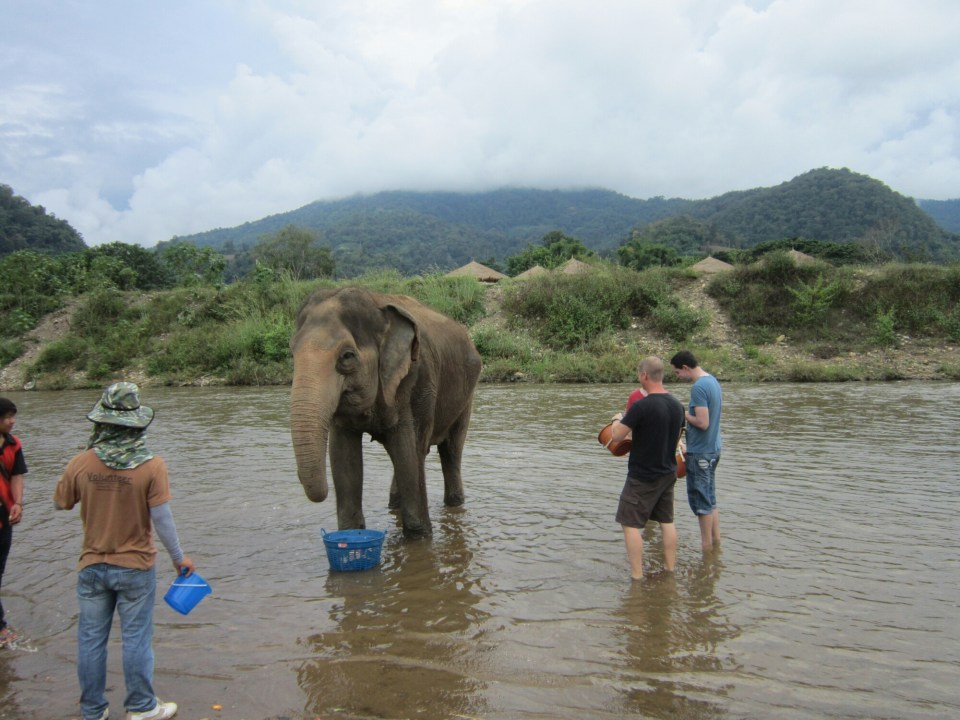 Things to do in Chiang Mai Elephant Nature Park