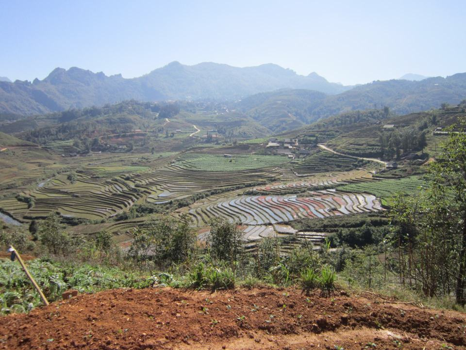 Showing rice terraces in Sapa with mountains in the background