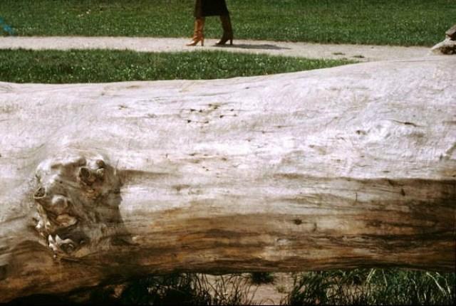 'Fallen Tree' Charles Jourdan, Guy Bourdain